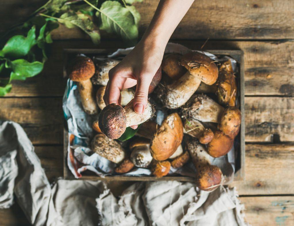 Grzyby – czy naprawdę nie maja żadnych wartości odżywczych?