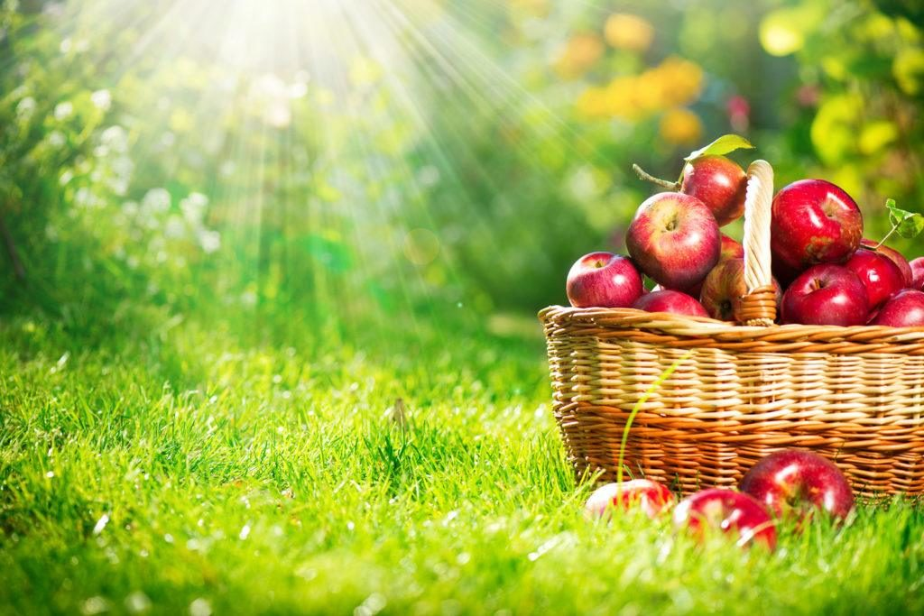 ajwendieta-jablka-co-zawieraja-1024x683.jpg