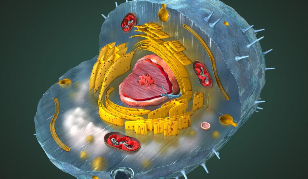 dieta wspomaga mitochondria
